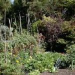 Organic Gardening and Farming Forum