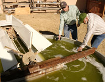 Algae biodiesel research New Mexico State University