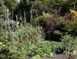 Health farming organic foods in your own backyard