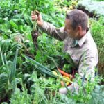 Guide and Charts on Planting Companion Vegetables and Herbs, and Fruit Tree Companion Planting