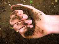 What is living soil?