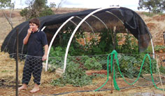 Tunnel green house for growing vegetables