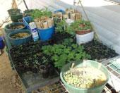 Plant propagation area