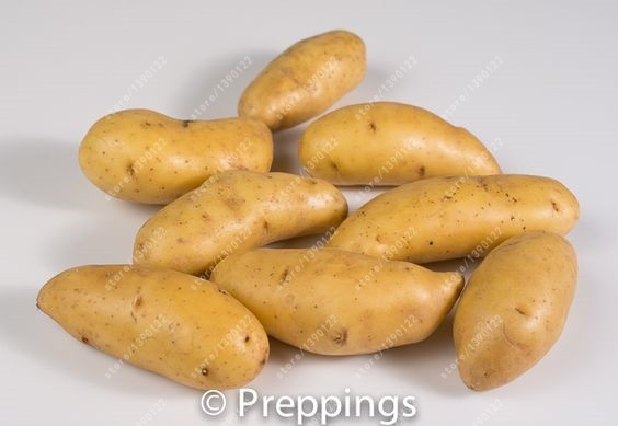 Russian Banana Fingerling Potato Seed Organic Seeds